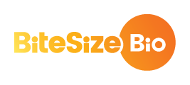 bitesize-bio-rgb-logo